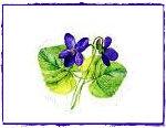viole-mazzolino-framed