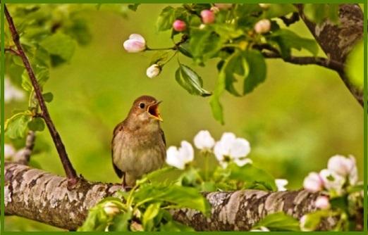 bird_spring3